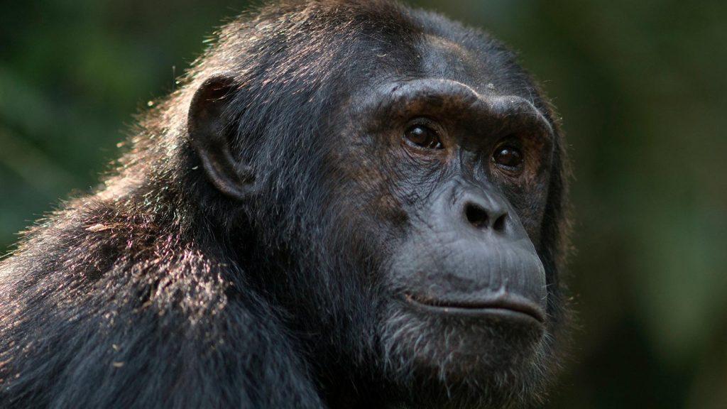 Kibale National Park - Chimpanzee Tracking