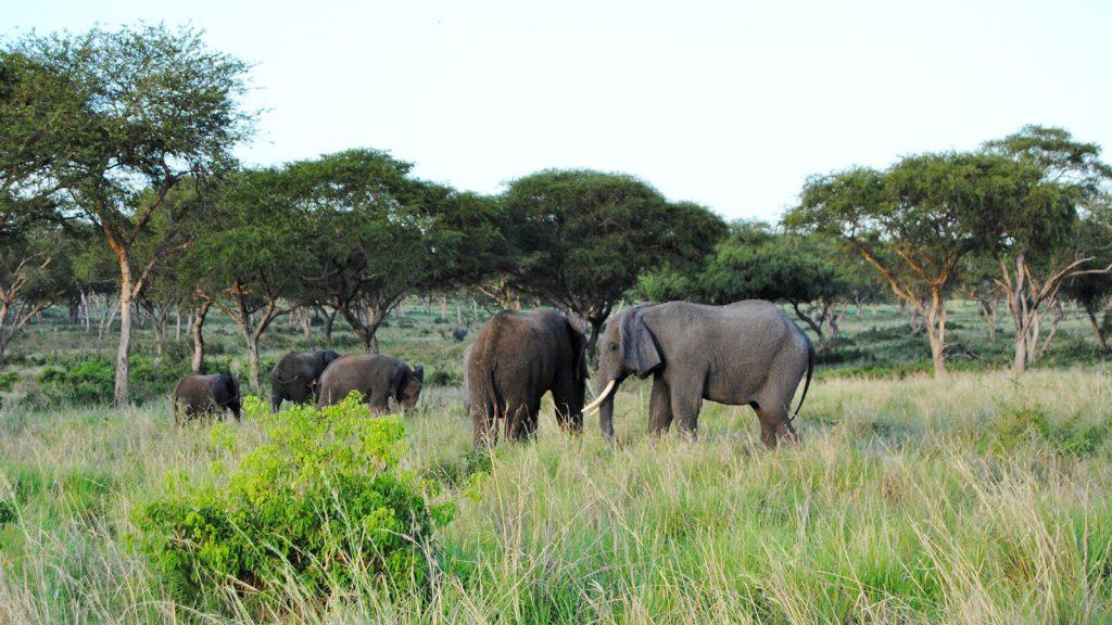 African Safaris in Murchison Falls National Park